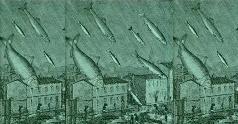 rain of fish - neurodope.com