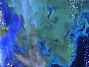 Landsat 8 captured this view of a phytoplankton bloom near Alaska's Pribilof Islands