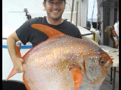 Scientists Discover The World's First Warm Blooded Fish