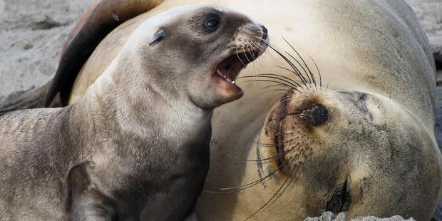 killer sea lions - neurodope