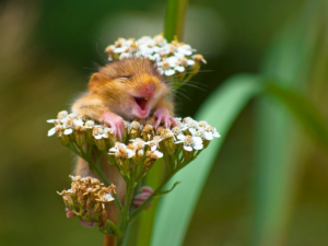 The Comedy Wildlife Photo Award entries are Pretty Funny