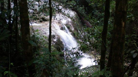 Tribal Magic: Dream Analysis by the Senoi Tribe of Malaysia on neurodope.com