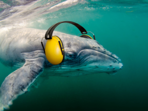 Seismic Exploration of Offshore Oil andGas Drilling is Killing Sea Life on neurodope.com